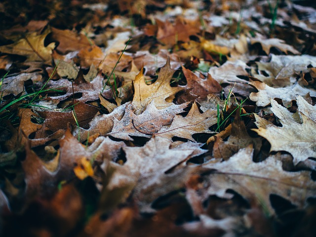 fall-cold