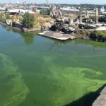 Algae update