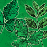 Outsmarting Poison Ivy and Other Poisonous Plants