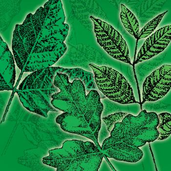 poison-oak-ivy-sumac