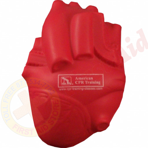The American CPR Training™ / AEHS Foam Anatomical Heart