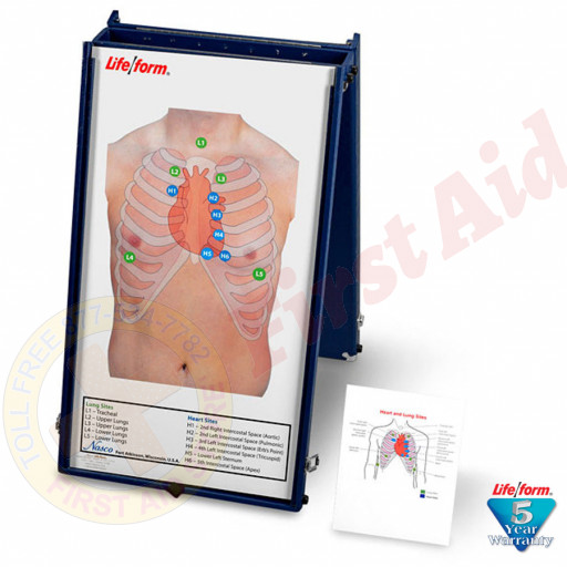 The Life/form® Auscultation Board with Case Only