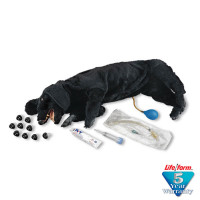 The Life/form® Basic Sanitary CPR Dog