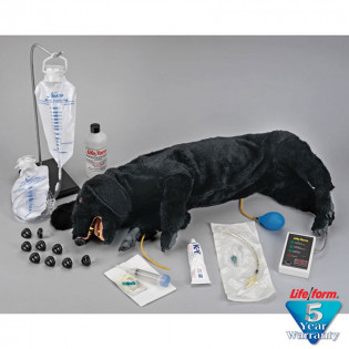 The Life/form® Advanced Sanitary CPR Dog